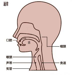 軟口蓋、発声、ボイトレ、ボイストレーニング
