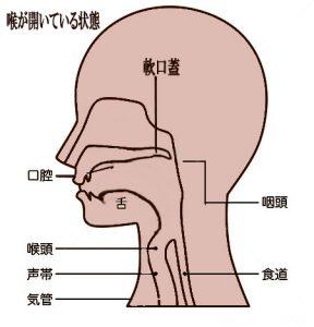 軟口蓋、発声、ボイトレ、ボイストレーニング、張り上げ