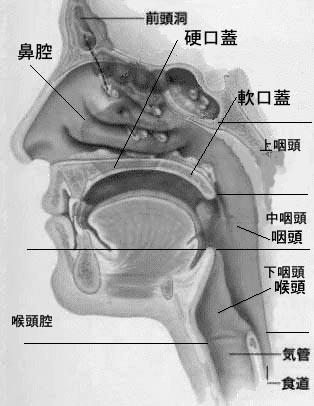 鼻腔、口腔、咽頭、
