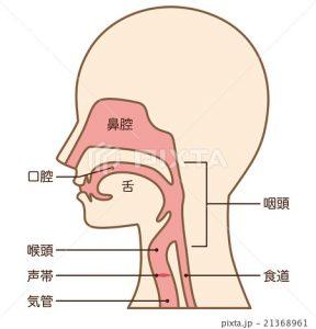 滑舌、喉を開く、舌、舌の使い方